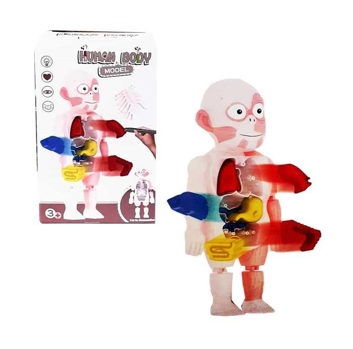 toko mainan online HUMAN BODY MODEL - W603